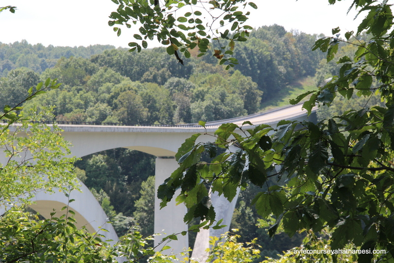 Natchez Trace Parkway-20
