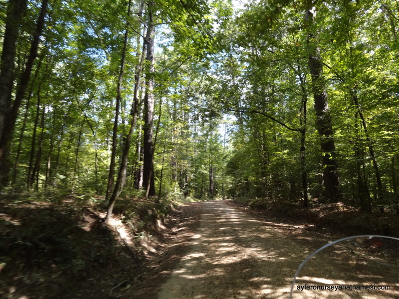 Natchez Trace Parkway3