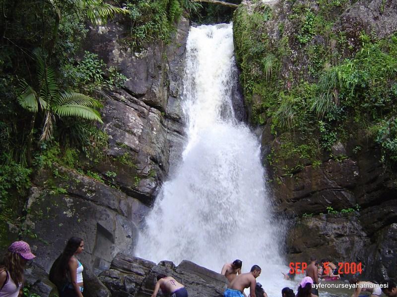 El Yunque yağmur ormanlarından...