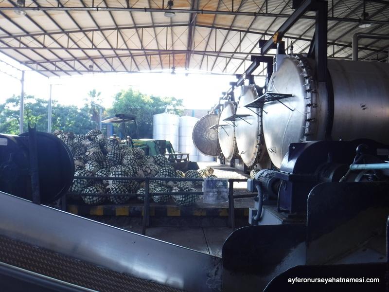 Rubio Tekila Fabrikası